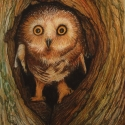 Owlett - Carol Way - pastels copy